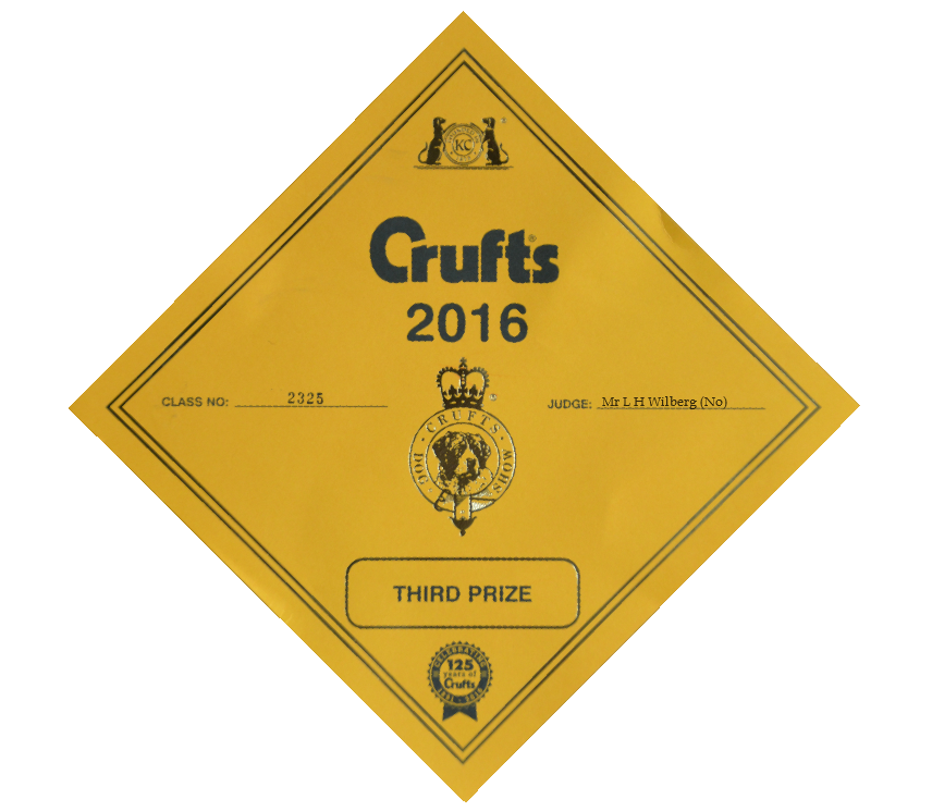 Crufts clear vector